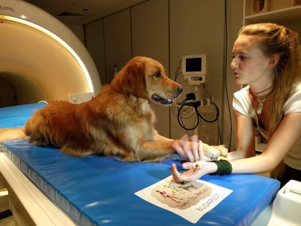 Собаки могут на самом деле понимать, что вы им говорите. Исследование