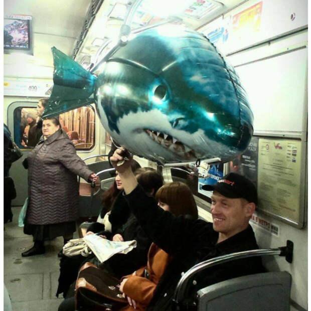 Акула в вагоне.
