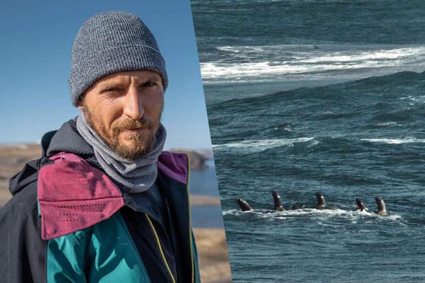 «Подумал, что все»: российского серфера атаковали десять тюленей наКурилах