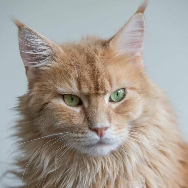 Верность кота