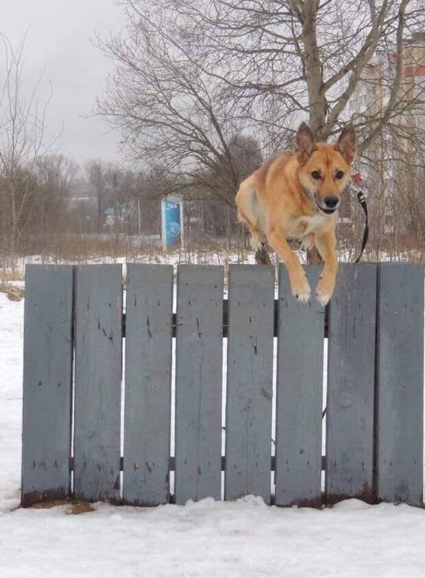 Рыжий щенок грустила три года в питомнике, пока на него не обратил внимание мужчина с добрым сердцем
