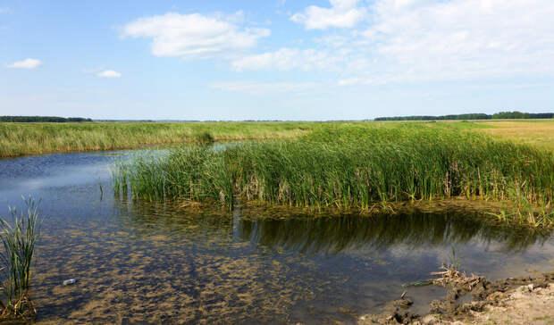 Расчистка пруда вСветлоярском районе выполнена на треть