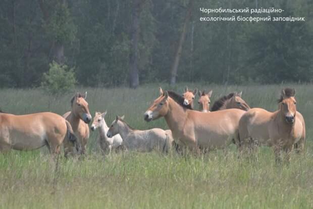 Фото: жеребцы этого года отличаются размером и светлым цветом