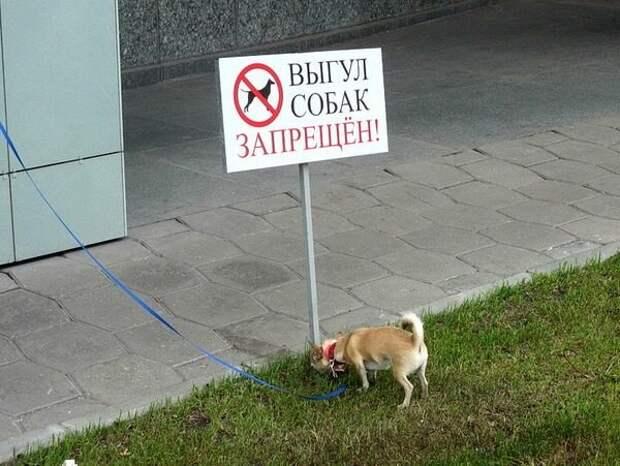 Противостояние - люди без собак против тех, кто с собаками