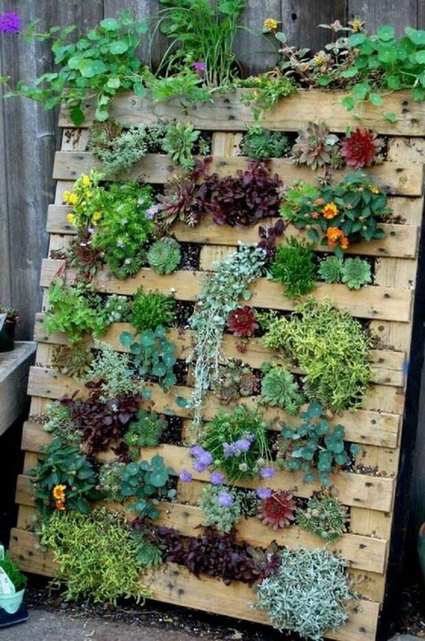 поддон для растений