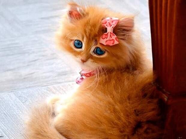 Нет плохих или некрасивых котиков и кошечек. Бывают плохие хозяева