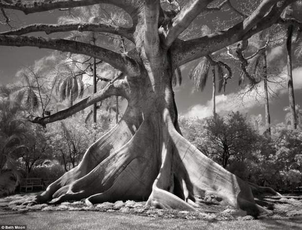 Самые старые деревья мира: гиганты, которым хочется поклониться