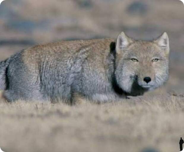 Странные и редкие животные - 1 часть