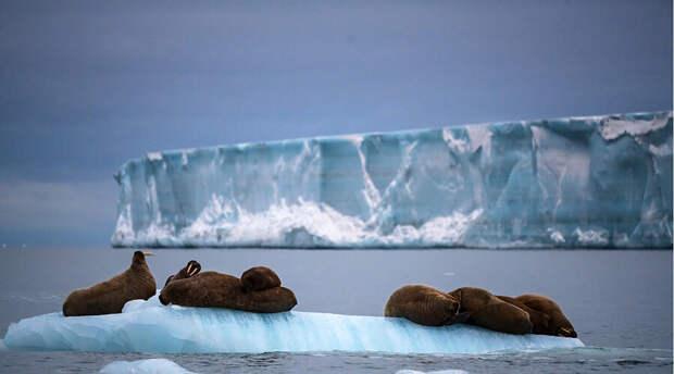 Российским заключенным хотят скостить срок наказания за работу в Арктике