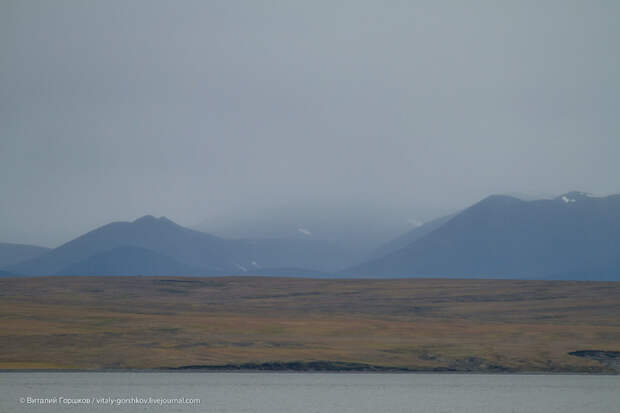 Восточное побережье Таймыра. Встреча с моржами путешествия, факты, фото