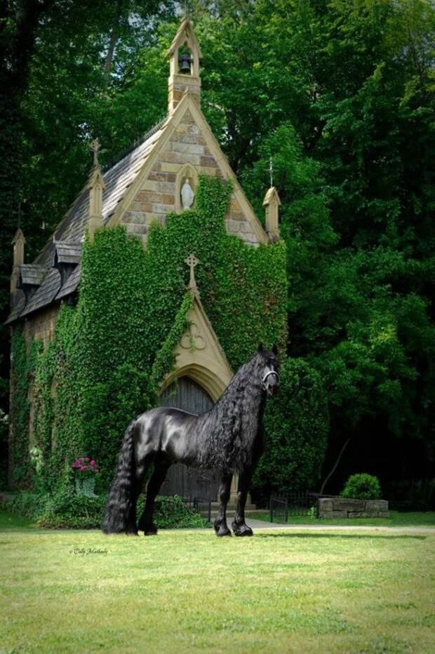 8 фото коня Фредерика, который невероятно крут, и знает об этом
