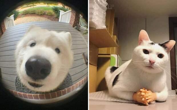10+ смешных и милых фото животных, которые поднимут вам настроение