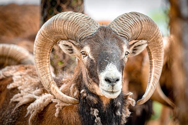 Глава алтайского экологического фонда оказался браконьером