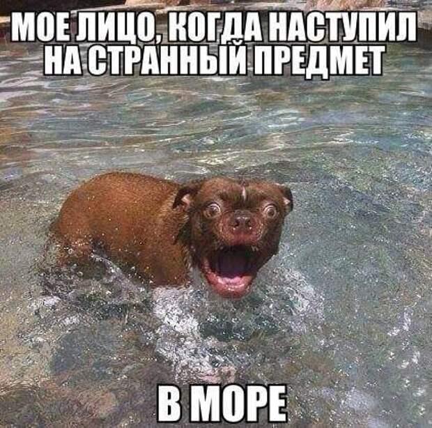 xMSms4Qpg_o