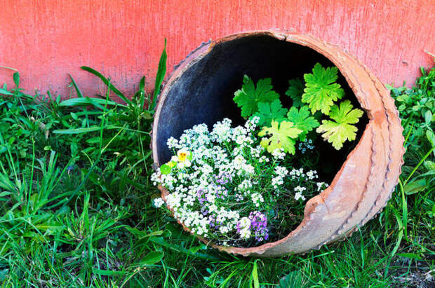 Разбитый горшок может стать стражем особенно дерзких растений. /Фото: cdn.apartmenttherapy.info