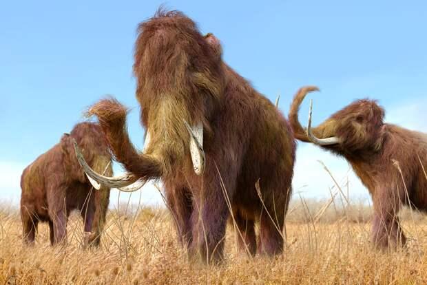 Особенности плейстоценовой охоты