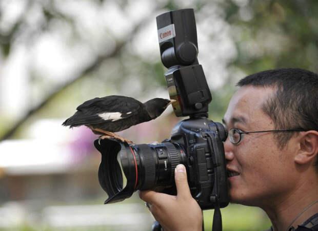 Любопытная птица.