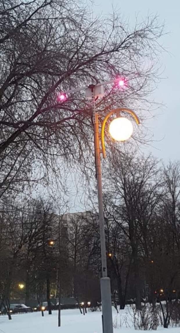 У памятного дерева на Череповецком бульваре появилась подсветка