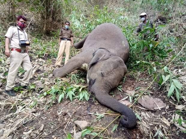 В Индии 18 слонов убило молниями во время шторма