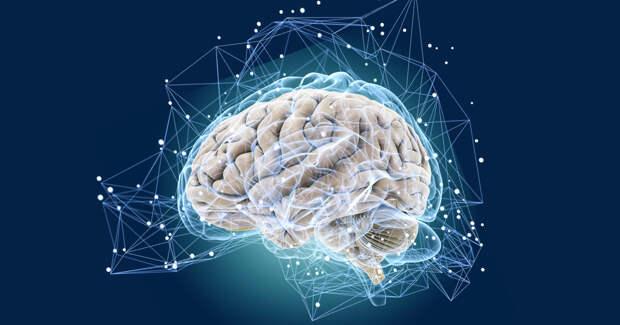 Неврологи рассказали о пользе коротких перерывов для усваивания новых знаний