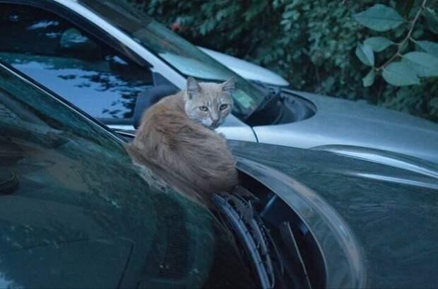 Сделай фотографию будто это моя машина Хвостатые, братья наши меньшие, город, кот, кошка, улица, уличные кошки, эстетика