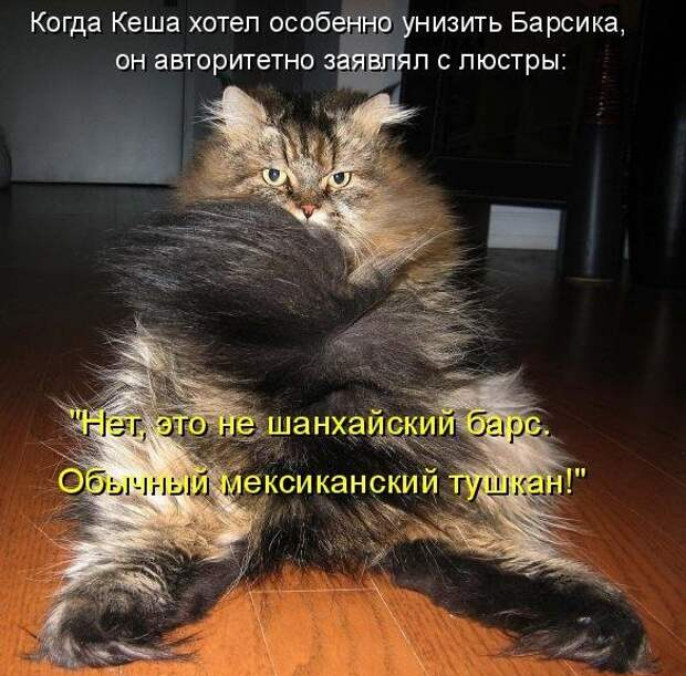 1450431421_kotomatrica-8
