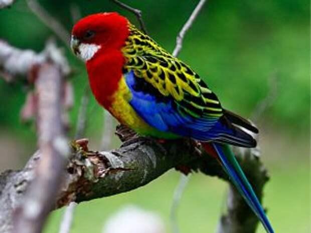 Красивый попугай