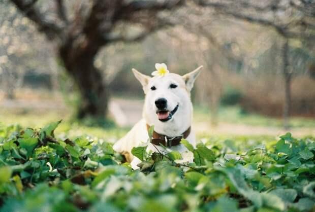 Счастливая собака Глута, победившая рак Глута, собака, счастье
