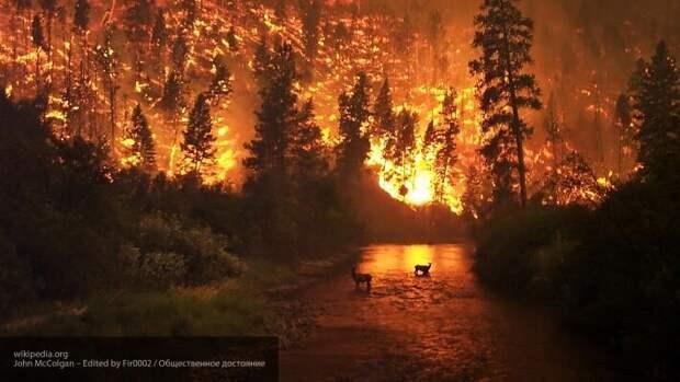 Снимки из космоса показали масштабы лесных пожаров в Америке