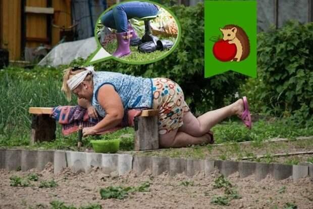 Фото: https://7info.ru/wp-content/uploads/2019/08/cropped-dachnitsa-upala-696x392.jpg