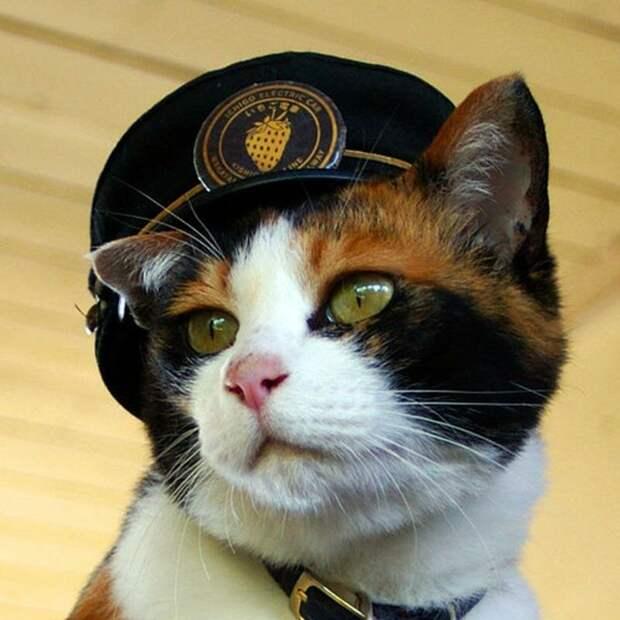 Тама - кошка-самурай и начальник станции, спасшая японскую железную дорогу в мире, животные железная дорога, кошка, люди, спасение, япония