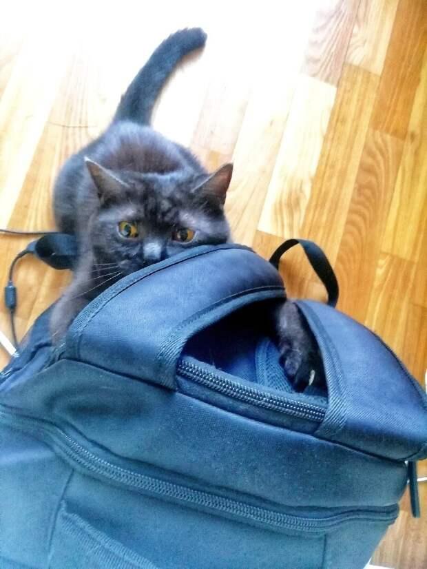 Кошкинья атакует рюкзак