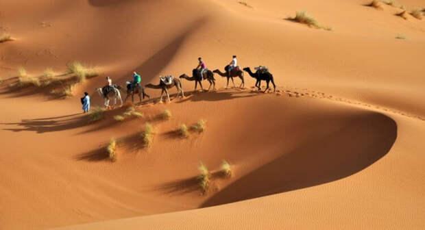 Зелёная Сахара — грёзы или скорое будущее?