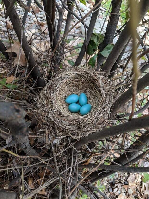 7. «Малиновка отложила яйца рядом с моей верандой» в мире, подборка, природа, удивительно, фото