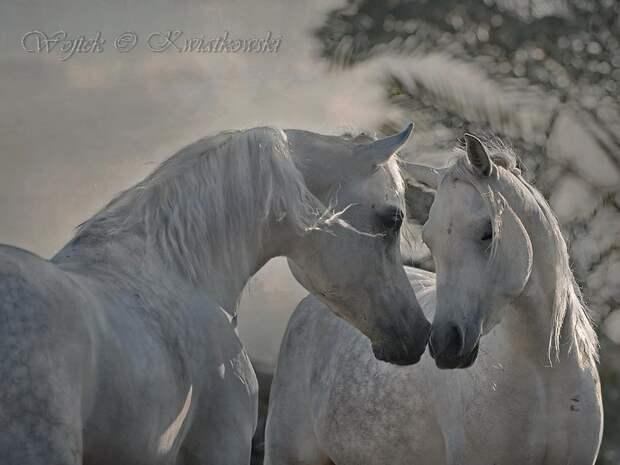 ФОТОВЫСТАВКА. Wojtek Kwiatkowski: портреты лошадей
