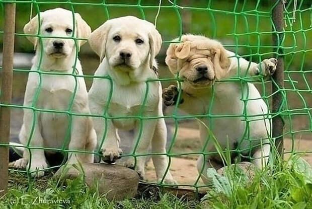Три стадии любопытства собаки, щенки. юмор