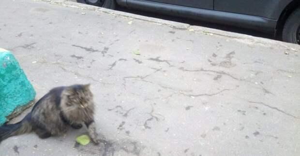 Прохожая спасла кота из-под машины в Свиблове