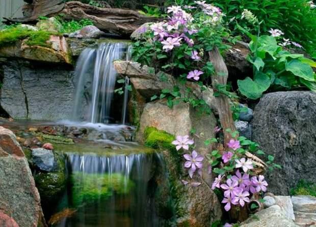Клематисы у водопада