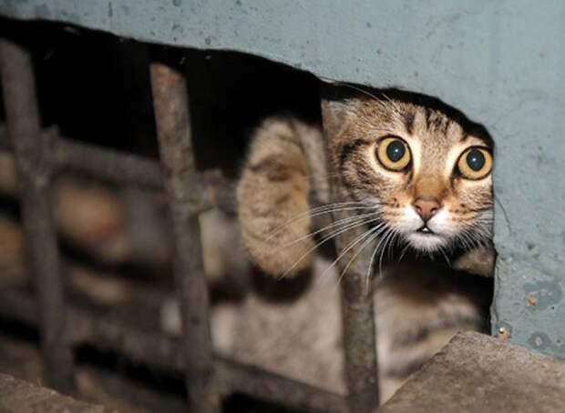 Что было с несчастными домашними животными Чернобыля после аварии