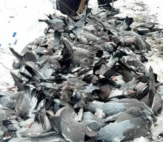 На Кубани браконьер убил более 200 голубей