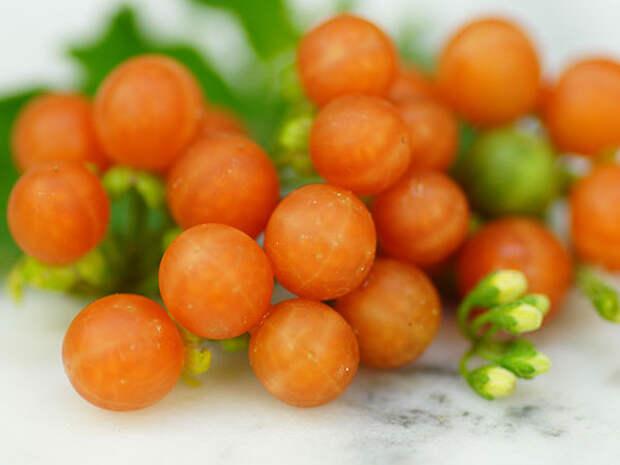 Паслен черный, а ягоды – оранжевые!