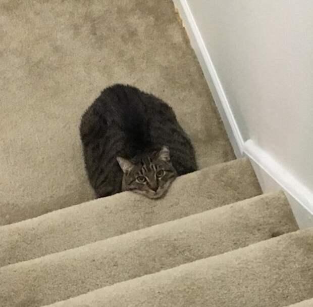 20+ доказательств того, что кошки — это глаза и уши инопланетян