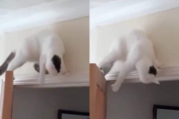 Уморительный план кота напасть на хозяйку закончился эпичным провалом