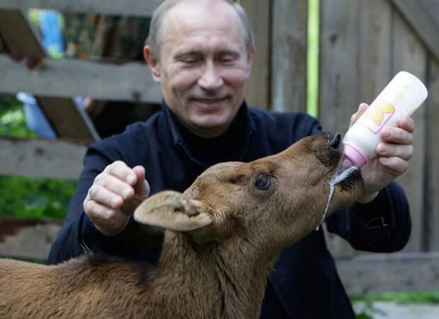 В.В. Путин кормит лосенка в заповеднике «Лосиный остров» недалеко от Москвы, 5 июня 2010 года.