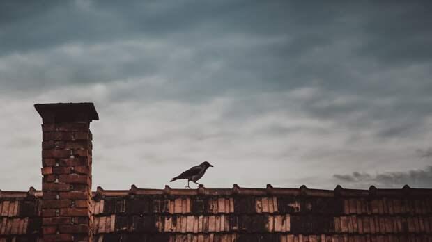 Ремонт крыш в Севастополе закончился возбуждением дел