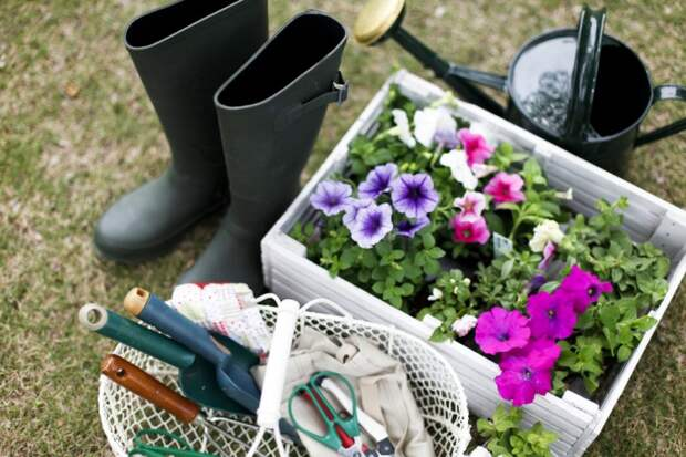 10 актуальных вопросов про садовый участок