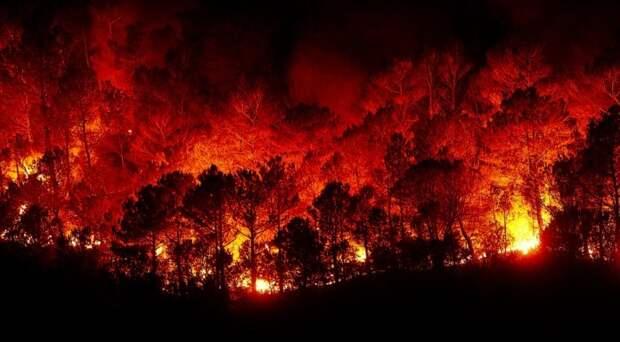 Лесные пожары тушат в регионах Сибири