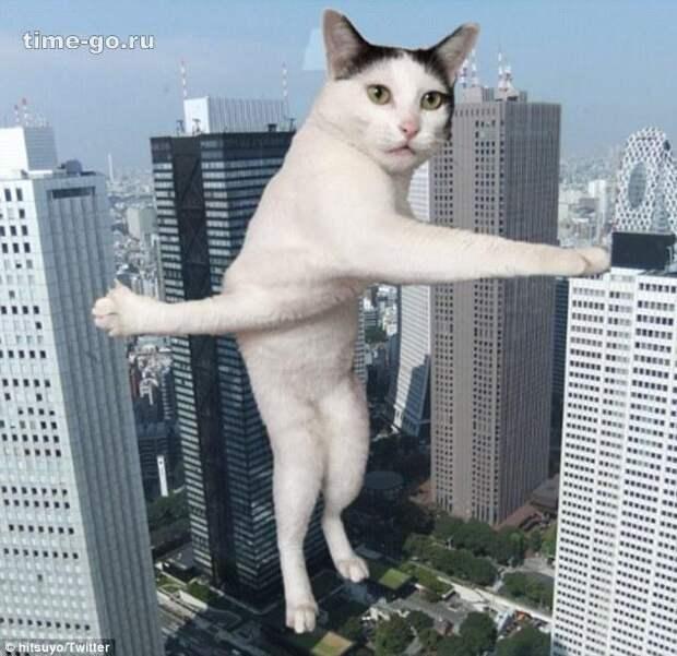 Застрявшая кошка стала героем фотожаб