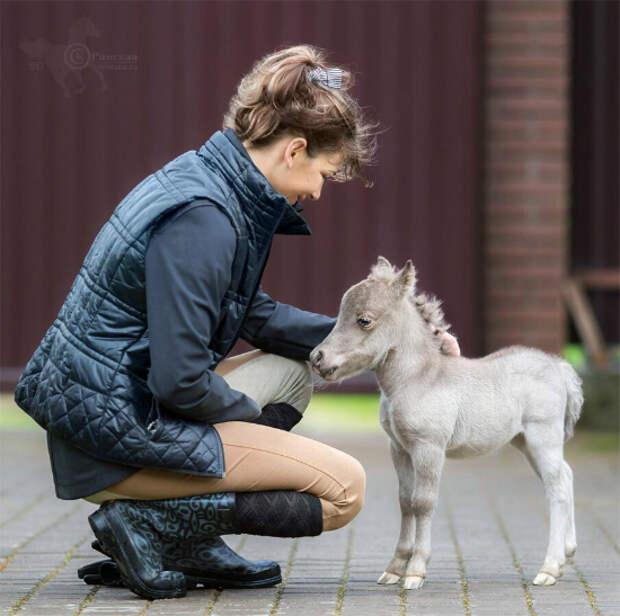В Ленинградской области родился самый маленький конь в мире ...