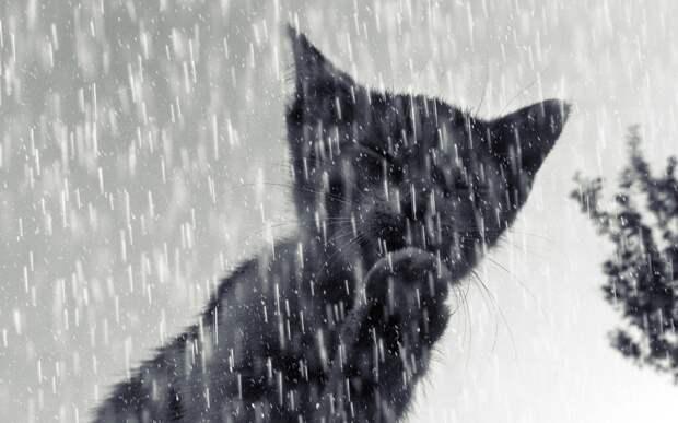 Удмуртию в выходные накроют дожди